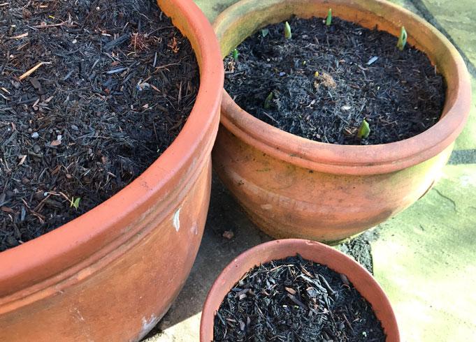 Catherine's English Garden Bulbs