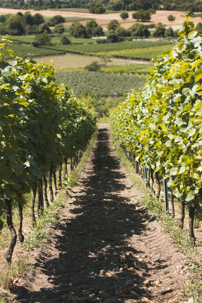 Vineyard Trip For Valentines Day