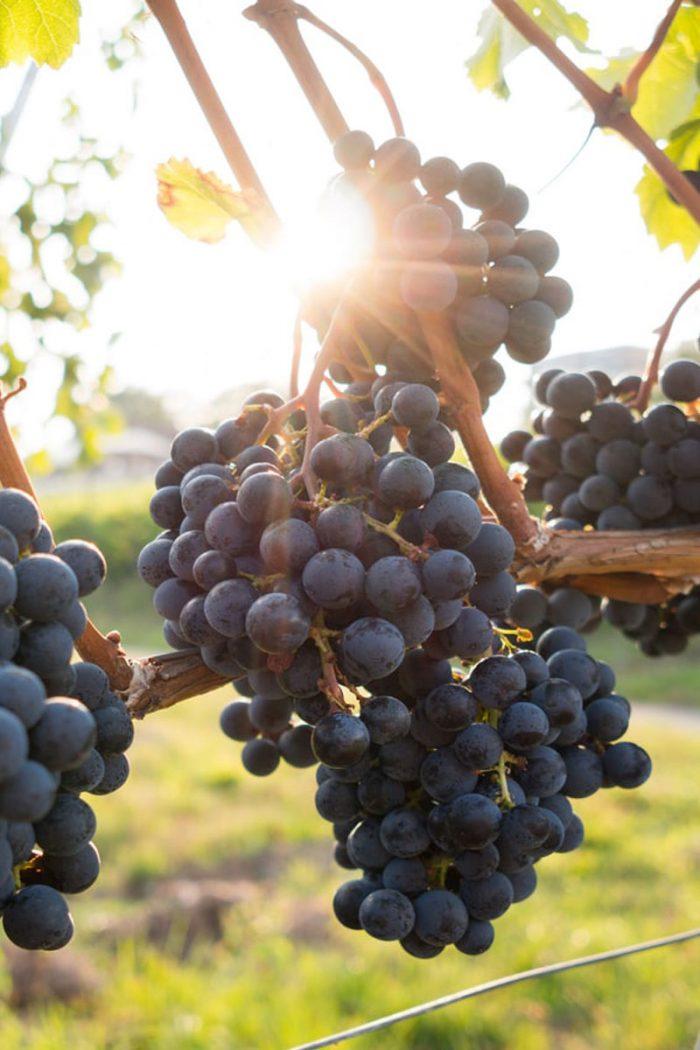 Vineyard For Valentine's Day Idea