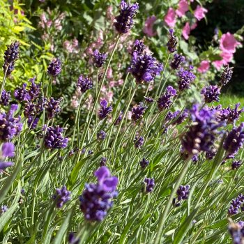 Our Favourite Plants and Flowers to boost the mood