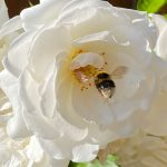 A Garden Buffet To Feed The Pollinators