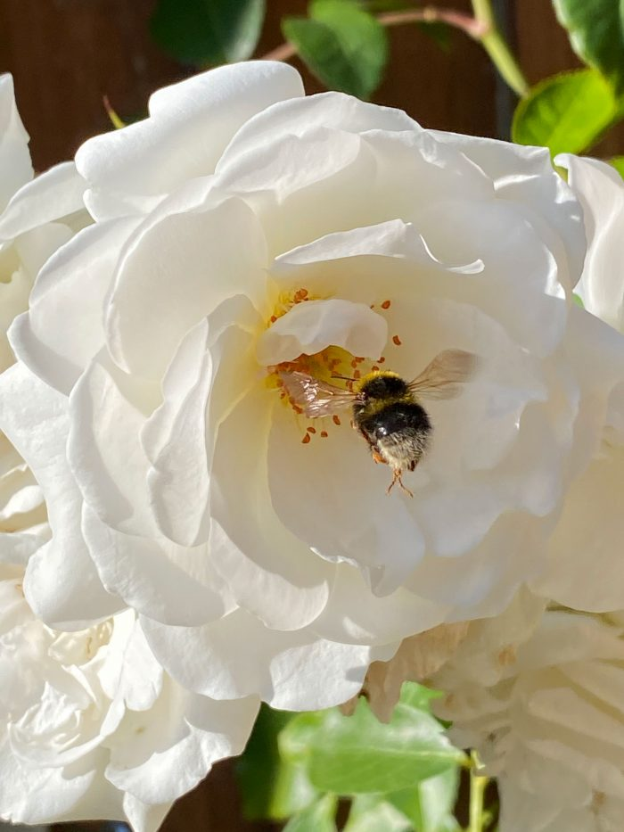 Flowers To Feed The Pollinators