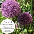 Featured This Month | May 2021 | Catherine's English Garden