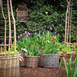 Featured This Month | My Real Garden