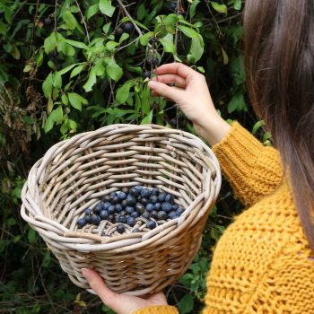A Beginner's Guide To Foraging | The Basket Company