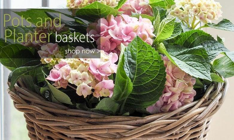 May Pot Planters